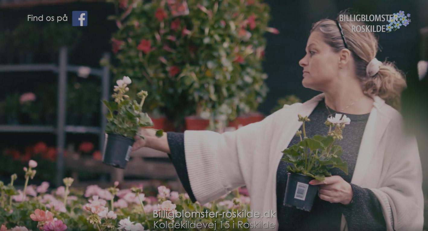 billige planter roskilde